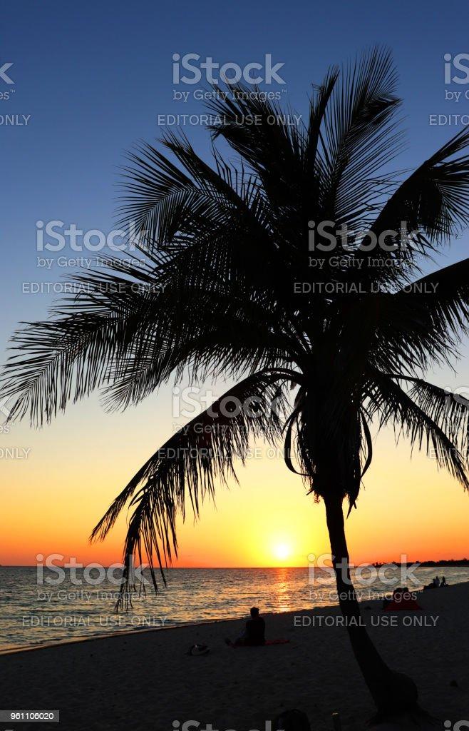 Palm Trees and Playa Ancon stock photo