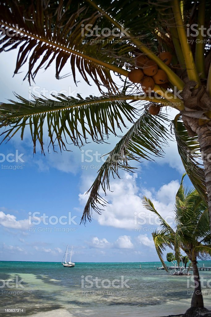 Palm trees and sailboat royalty-free stock photo