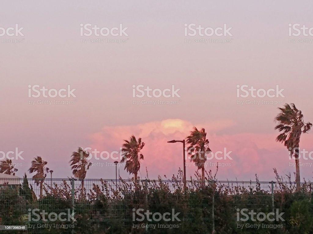 ヤシの木と秋の夕暮れの空 ストックフォト