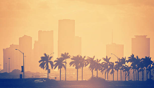 palm trees and skyline in miami back lit orange toned sunset miami scene - a line of palm trees in the foreground lining beside the highway connecting miami with the beaches and the brickell skyline in the background miami beach stock pictures, royalty-free photos & images