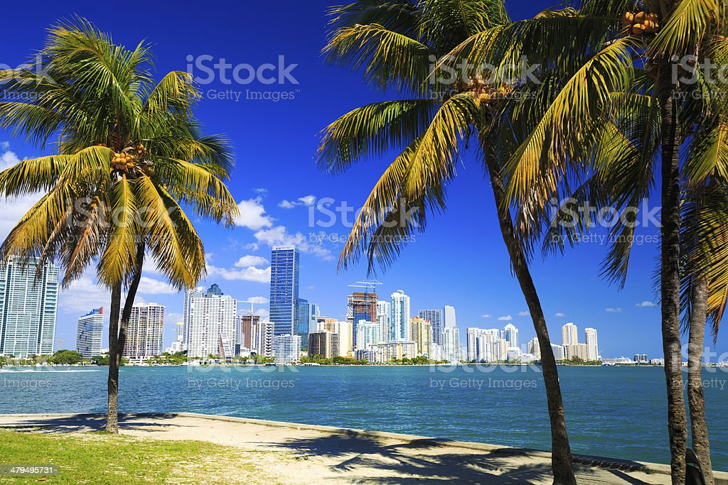 Palm trees and skyline of Miami stock photo