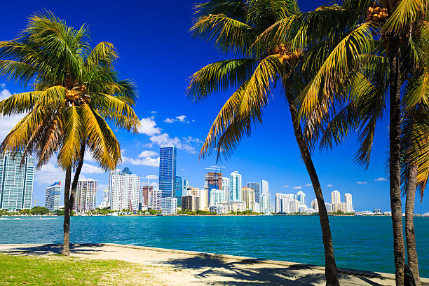 palm trees and skyline of miami - miami stock photos and pictures