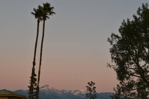palm trees and snow covered mountains at sunset - steven harrie stock pictures, royalty-free photos & images