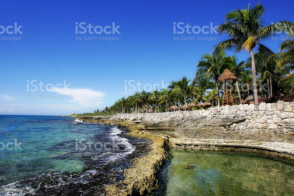 Palm trees and stone wall on the Mayan Riviera in Mexico stock photo