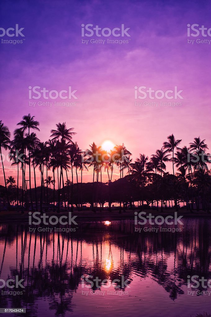 Palm trees and sunset of the sky,  Hawaii, stock photo