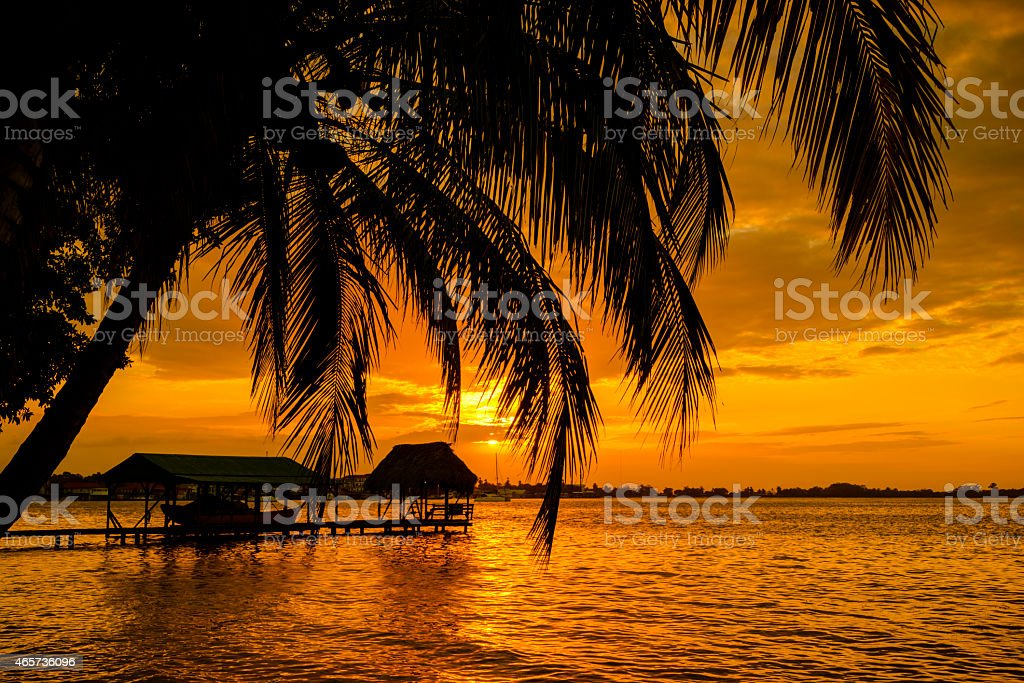 XXXL: Palm Trees and sunset stock photo