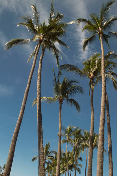 Palm Trees and the Blue Sky stock photo