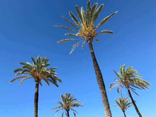 Palm trees and the sunny sky stock photo