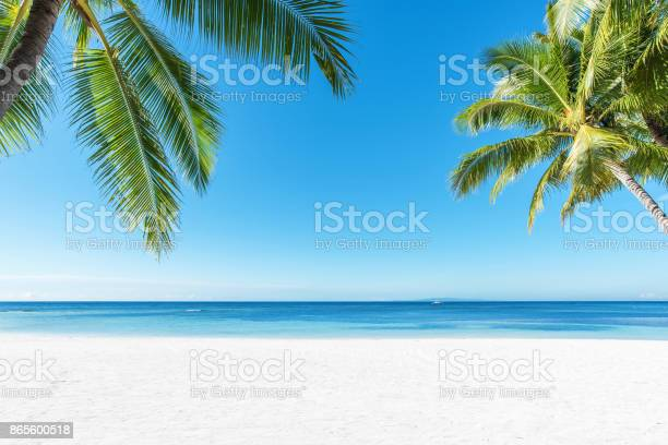 Palm trees and tropical beach background picture id865600518?b=1&k=6&m=865600518&s=612x612&h=mwsnqvfebsujkbrpbvfpd4wq2ka795dytnt831ooh6e=