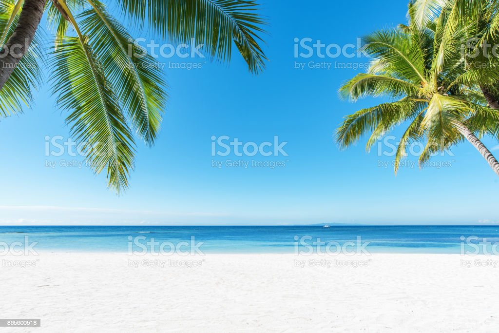 Palm trees and tropical beach background - foto stock