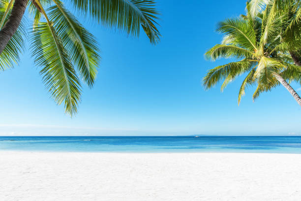 Palm trees and tropical beach background stock photo