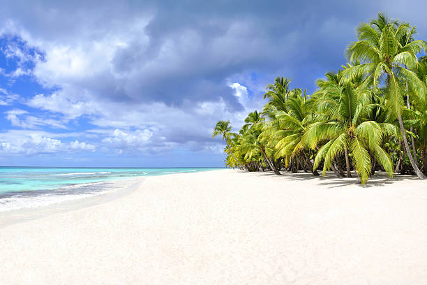 palm trees and tropical beach - desert island stock photos and pictures