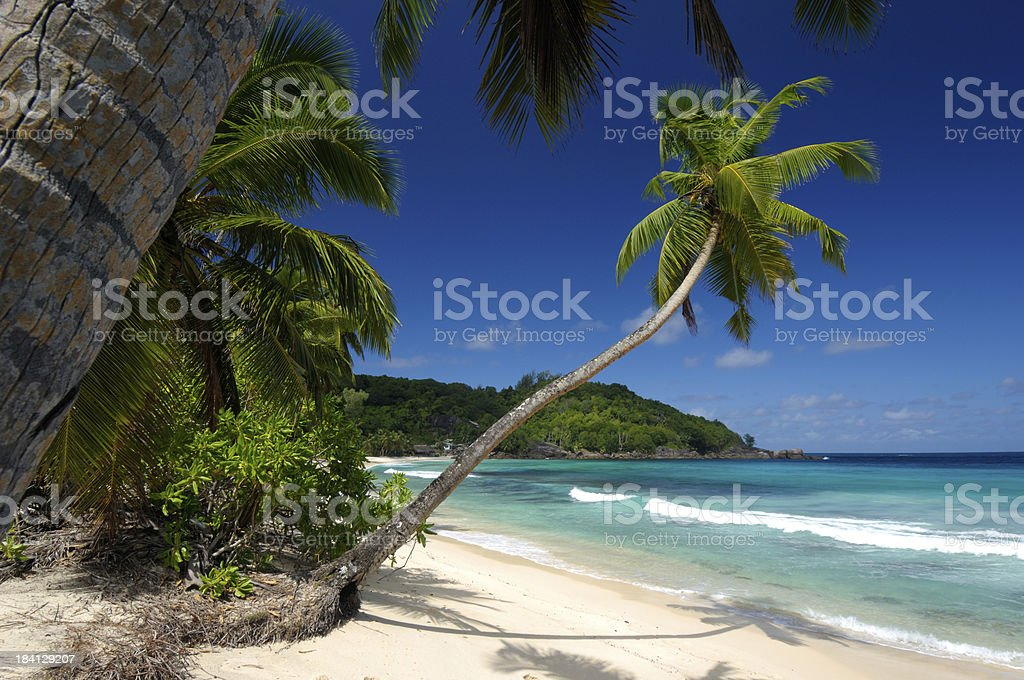 Palm trees at a lonely beach on seychelles royalty-free stock photo