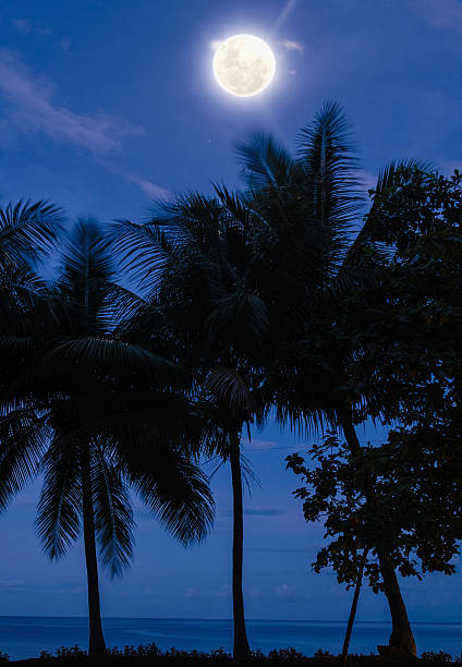 palm trees at blue hour with full moon stock photo