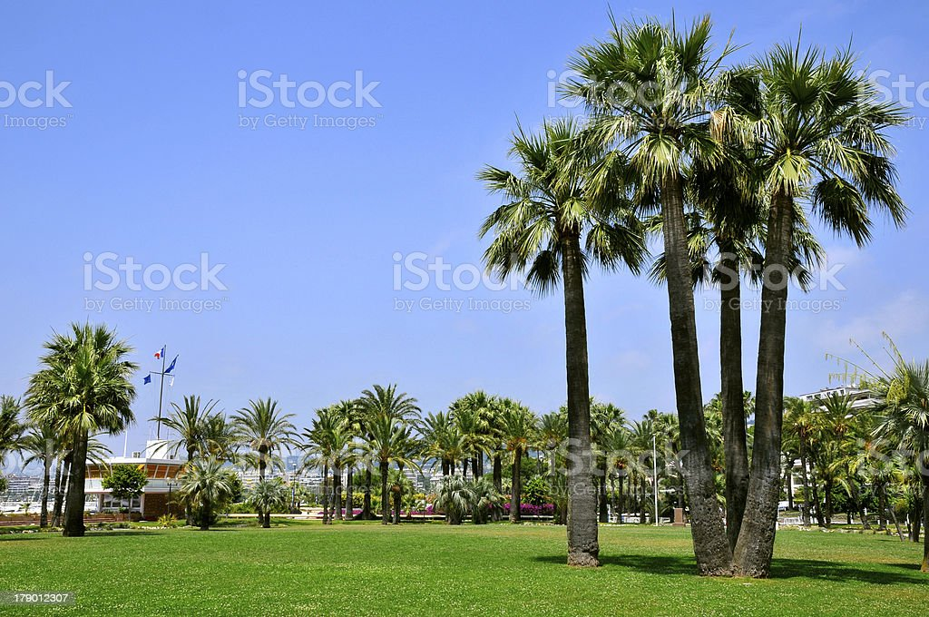 Palm trees at Cannes in France stock photo