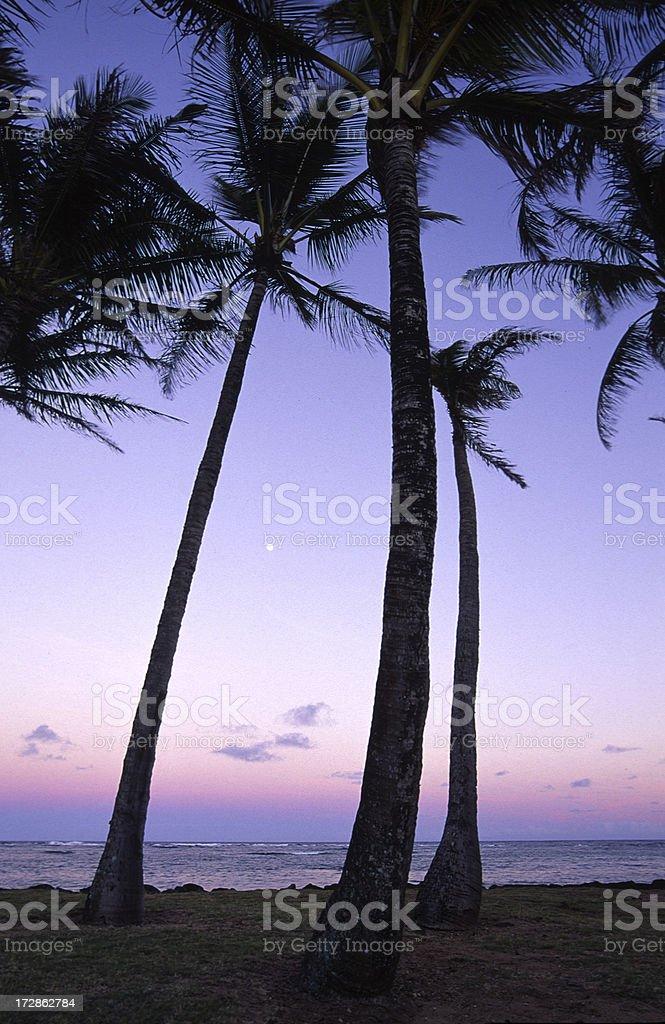 Palm Trees at dusk, Kauai, Hawaii royalty-free stock photo
