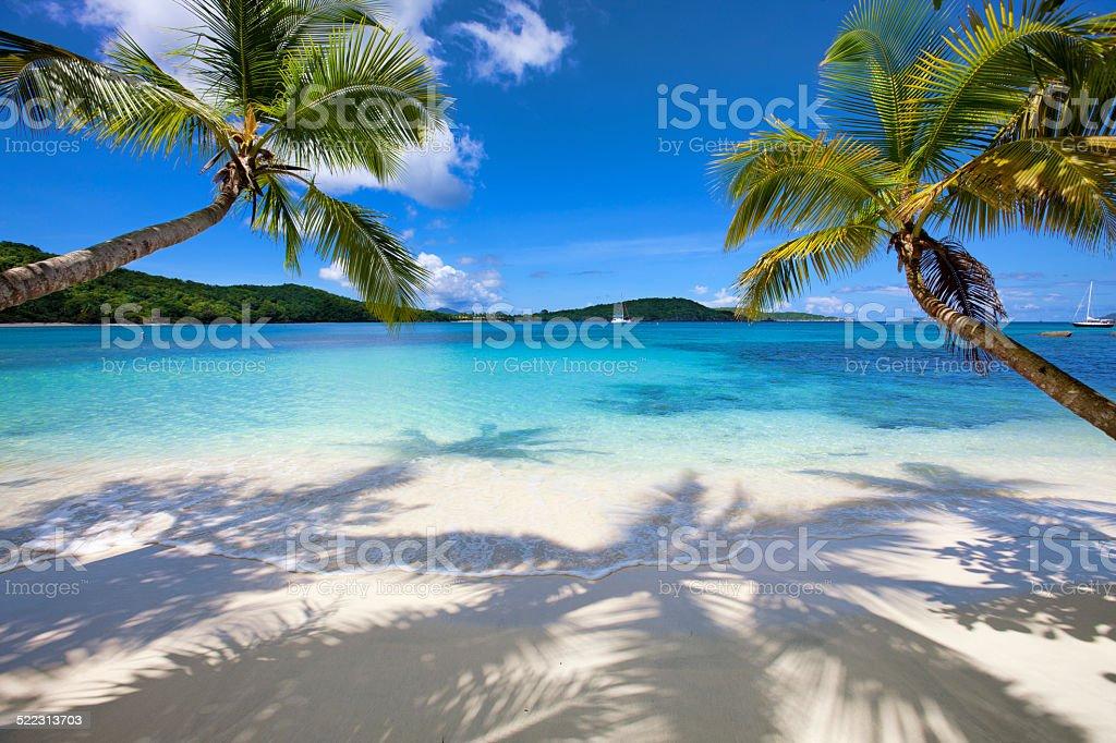 palm trees at Gibney Beach, St.John, USVI stock photo