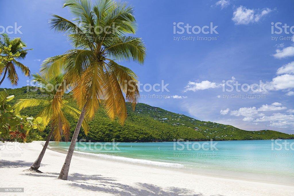 palm trees at Magens Bay, St.Thomas, US Virgin Islands stock photo