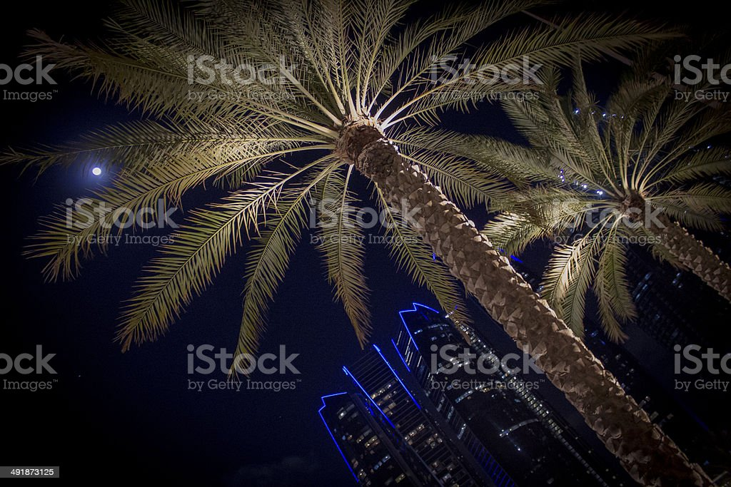 Palm trees at night with uplighting and buildings stock photo