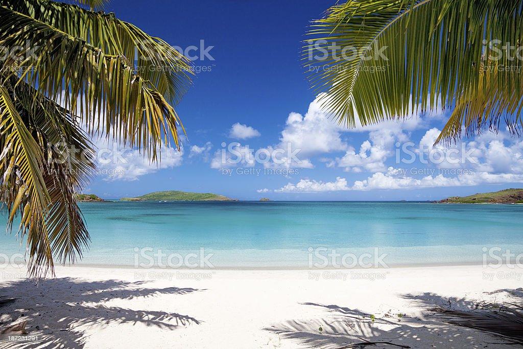 palm trees at Playa Tortuga on Isla Culebrita, Puerto Rico stock photo