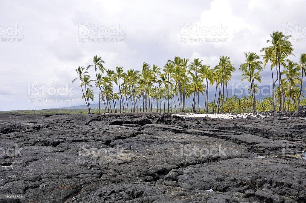 Palm trees at Pu'uhonua O Honaunau National Park (Hawaii) stock photo