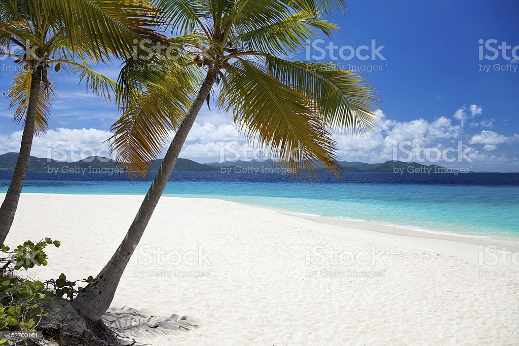palm trees at Sandy Cay, British Virgin Islands stock photo