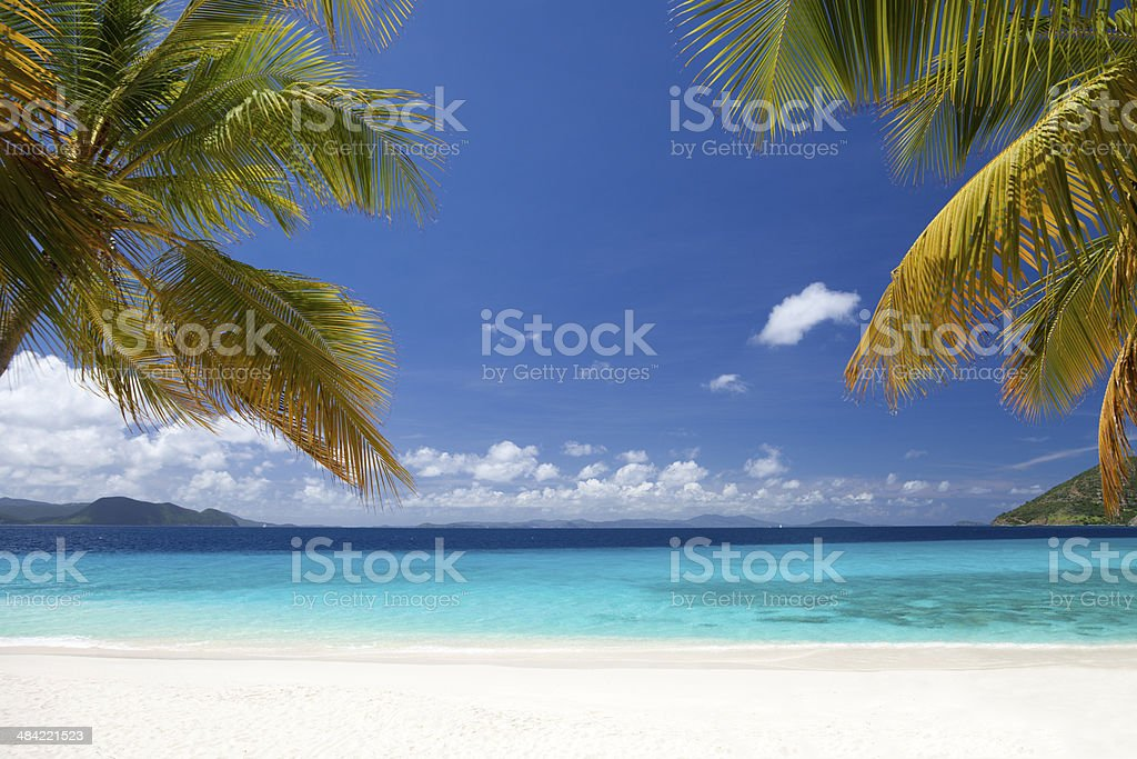 palm trees at Sandy Cay, British Virgin Islands stock photo
