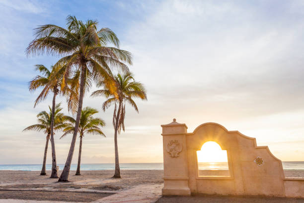 Palm trees at sunrise in Hollywood, Florida – Foto