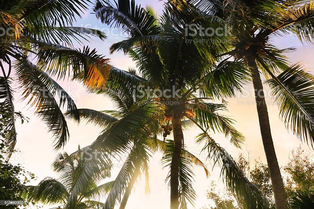 Palm Trees at Sunrise stock photo