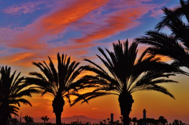 Palm Trees at Sunset 4 Palm trees at sunset. Long Beach, CA long beach california stock pictures, royalty-free photos & images