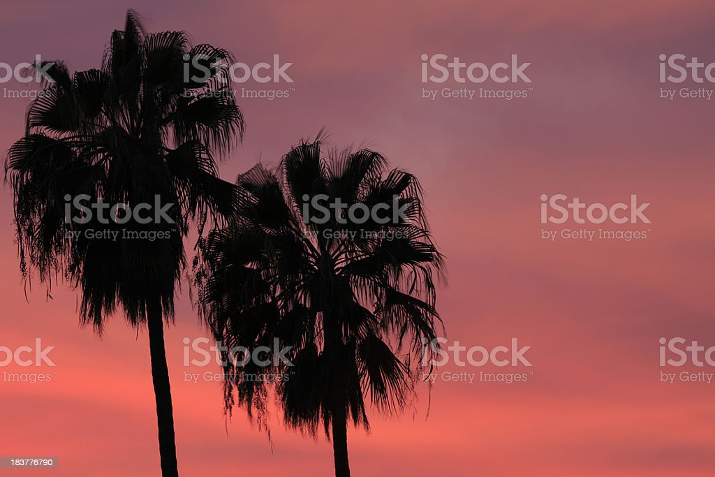 Palm Trees at Sunset stock photo