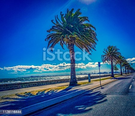 istock Palm trees at the beach close to a street 1128116444
