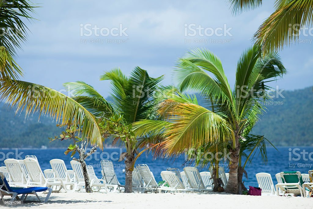 Palm Trees at the Caribbean royalty-free stock photo