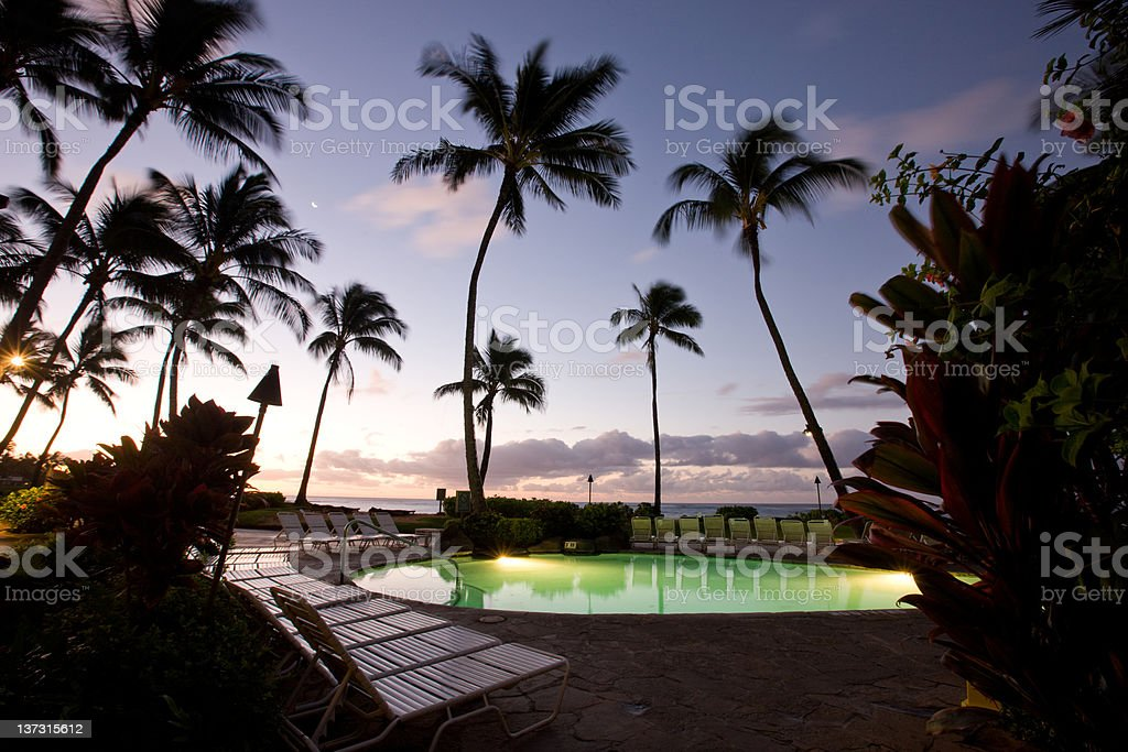 Palm Trees At The Pool royalty-free stock photo