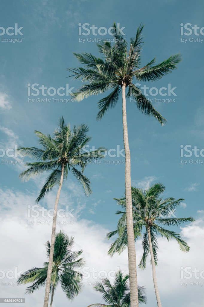 palm trees background royalty-free 스톡 사진