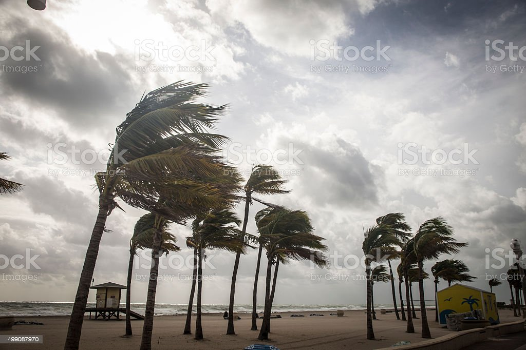Palm Trees Before A Tropical Storm or Hurricane stock photo