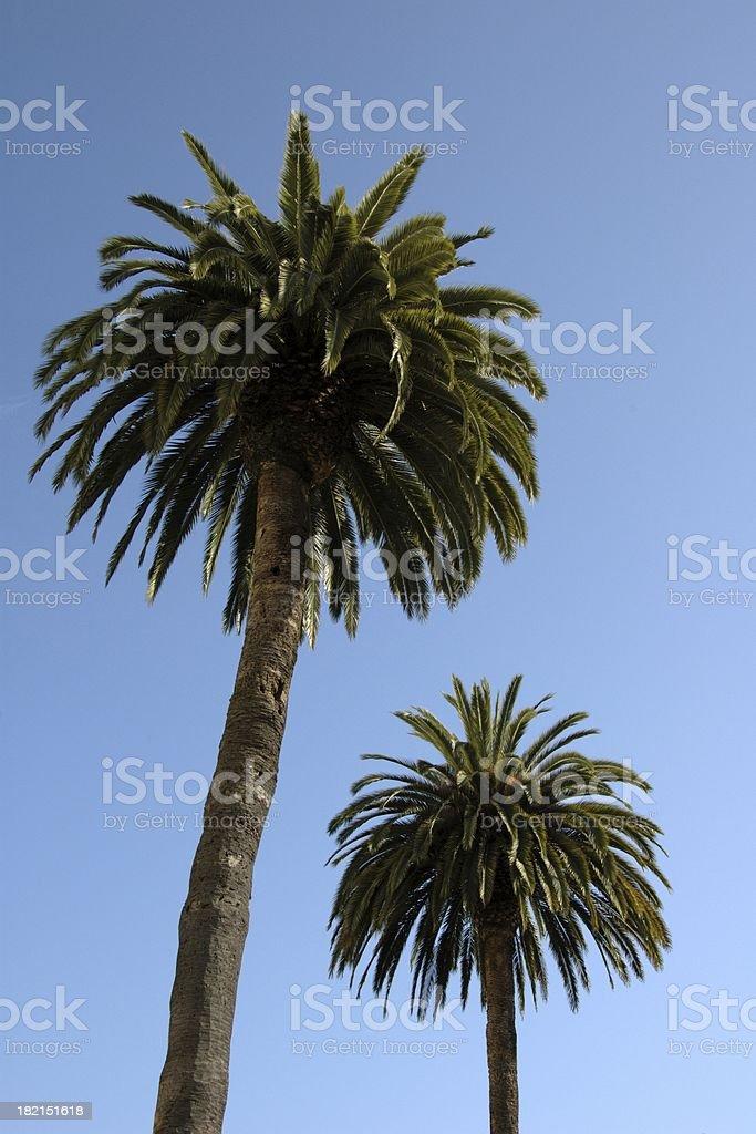 Palm Trees @ Berkeley (California, USA) stock photo