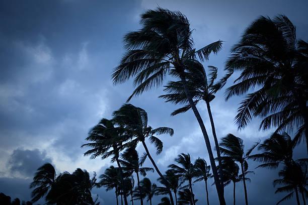 Tropical Storm – Foto