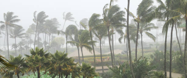 Palm trees blowing in the wind and rain as a hurricane approaches a tropical island Palm trees blowing in the wind and rain as a hurricane approaches a tropical island coastline blowing stock pictures, royalty-free photos & images