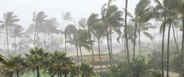 bir kasırga bir tropik ada yaklaştıkça rüzgar ve yağmur üfleme palmiyeler - rüzgar stok fotoğraflar ve resimler