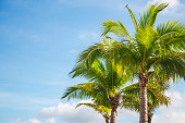 istock Palm trees branches against sky 1154925349