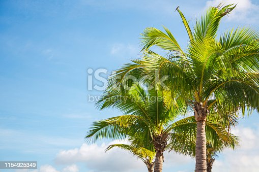 Florida - US State, California, USA, Gulf Coast States, Miami