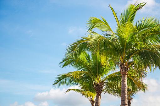 Florida - US State, California, USA, Gulf Coast States, Miami