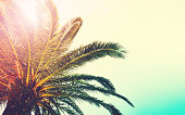 Palm trees branches against sky. Nature landscape at sea ocean coast. Tropical background with copy space. Vintage toned effect. Summer jungle tree. Holiday, Travel concept.