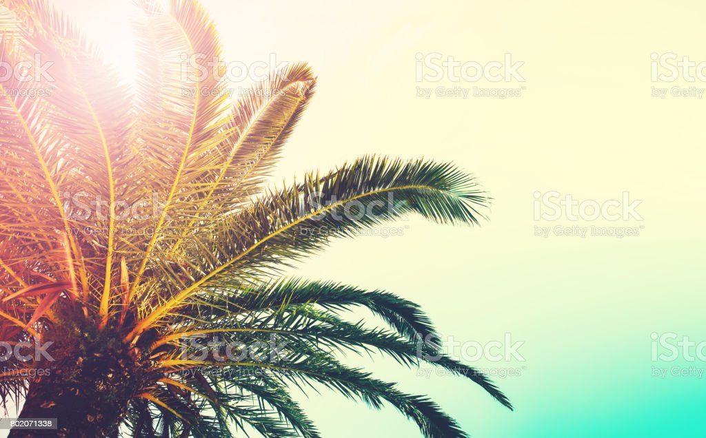 Palm trees branches against sky. stock photo