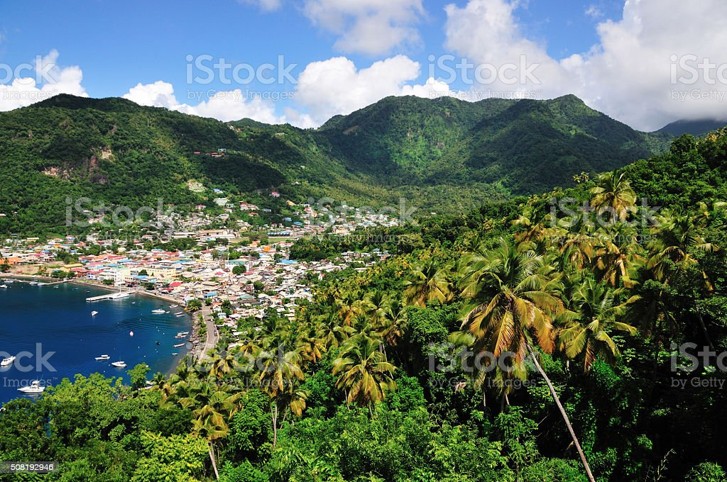 Palm trees by Soufriere stock photo
