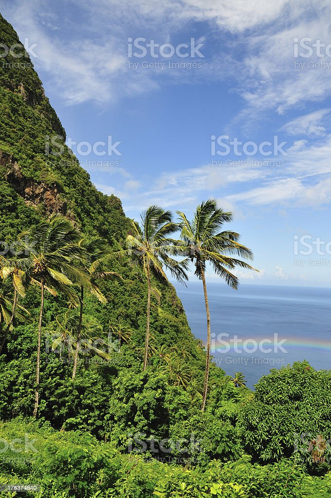Palm Trees by the Mountain stock photo
