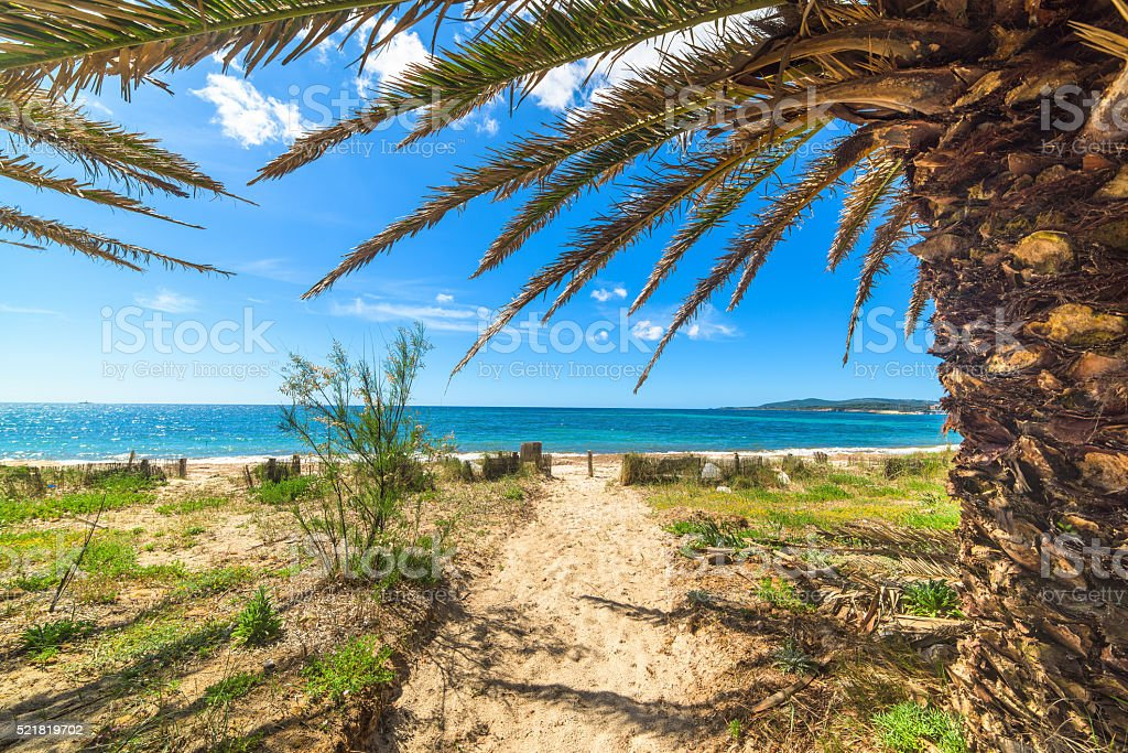 palm trees by the shore in Alghero stock photo