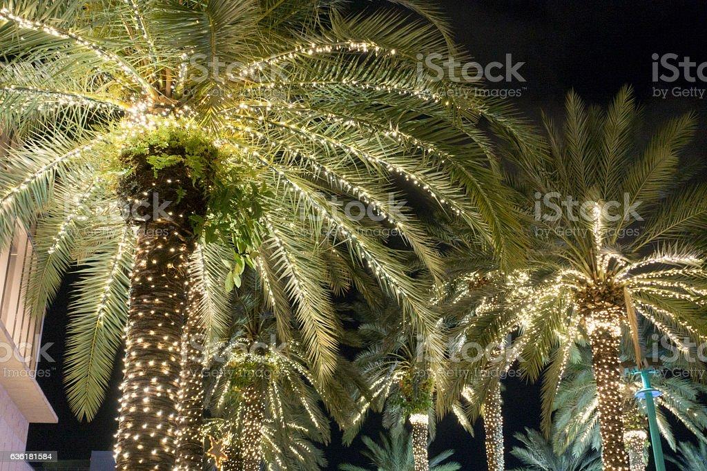 Palm Trees Christmas Lighting Miami Beach Royalty Free Stock Photo
