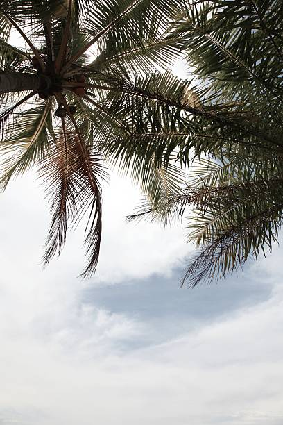Palmen, Nahaufnahme – Foto